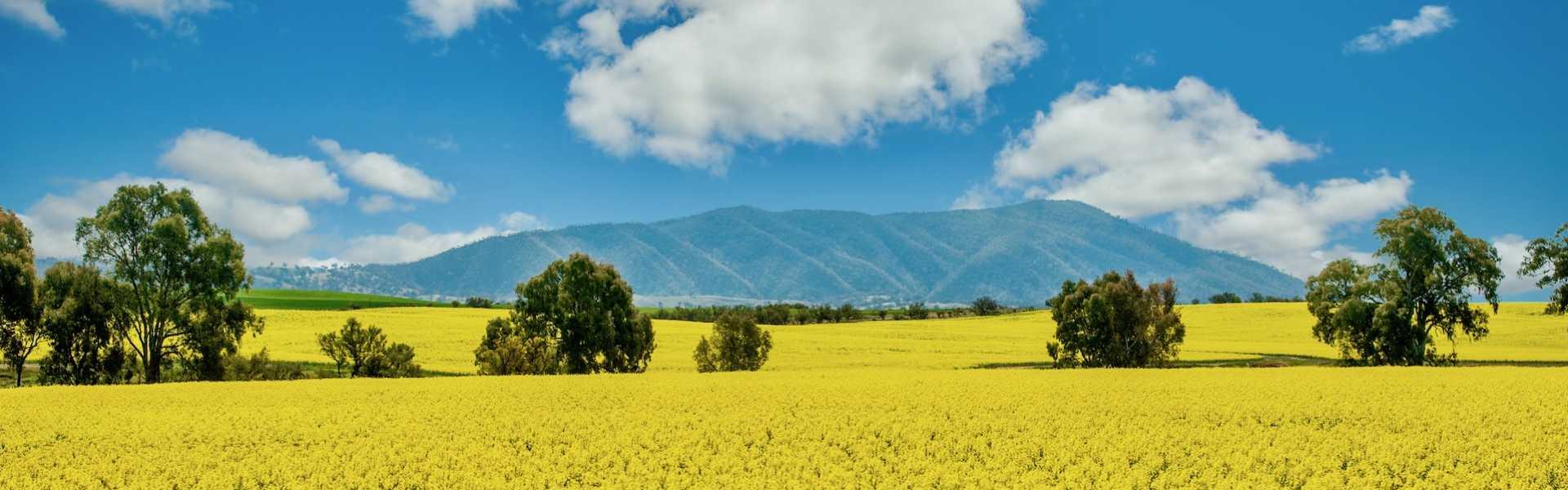 Kui Parks, Melrose Caravan & Tourist Park, Mount Remarkable