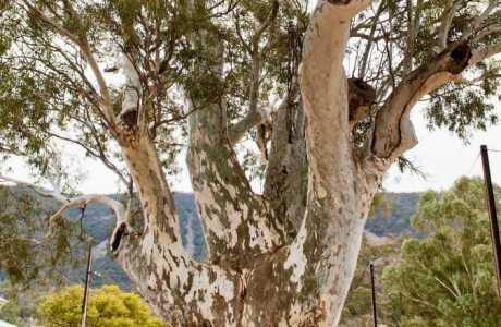 Kui Parks, Melrose Caravan & Tourist Park